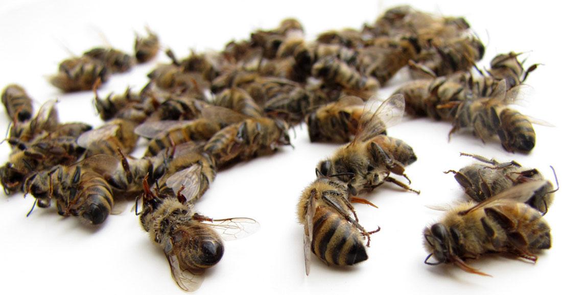 Le gouvernement vous demande votre avis pour interdire les pesticides qui tuent nos abeilles   Daily Geek Show